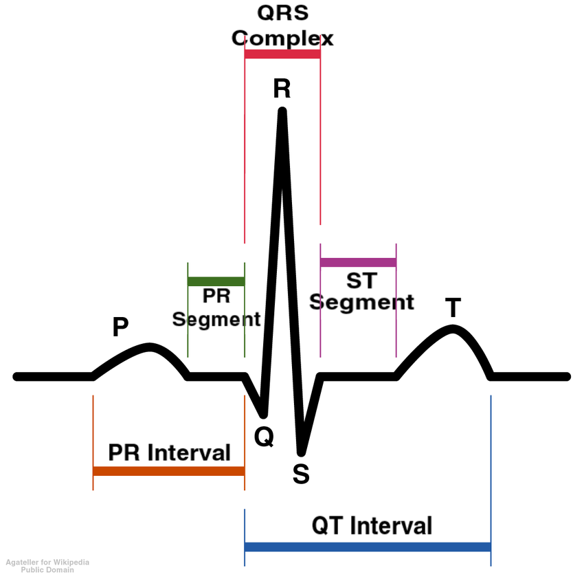 ECG of the Heart Cycle