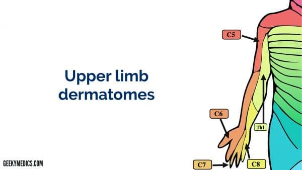 Upper Limb Dermatomes
