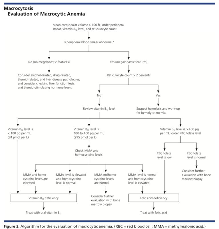 Evaluation of macrocytic anemia